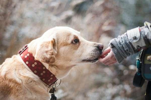 Обзор закона о защите животных – что грозит живодерам?
